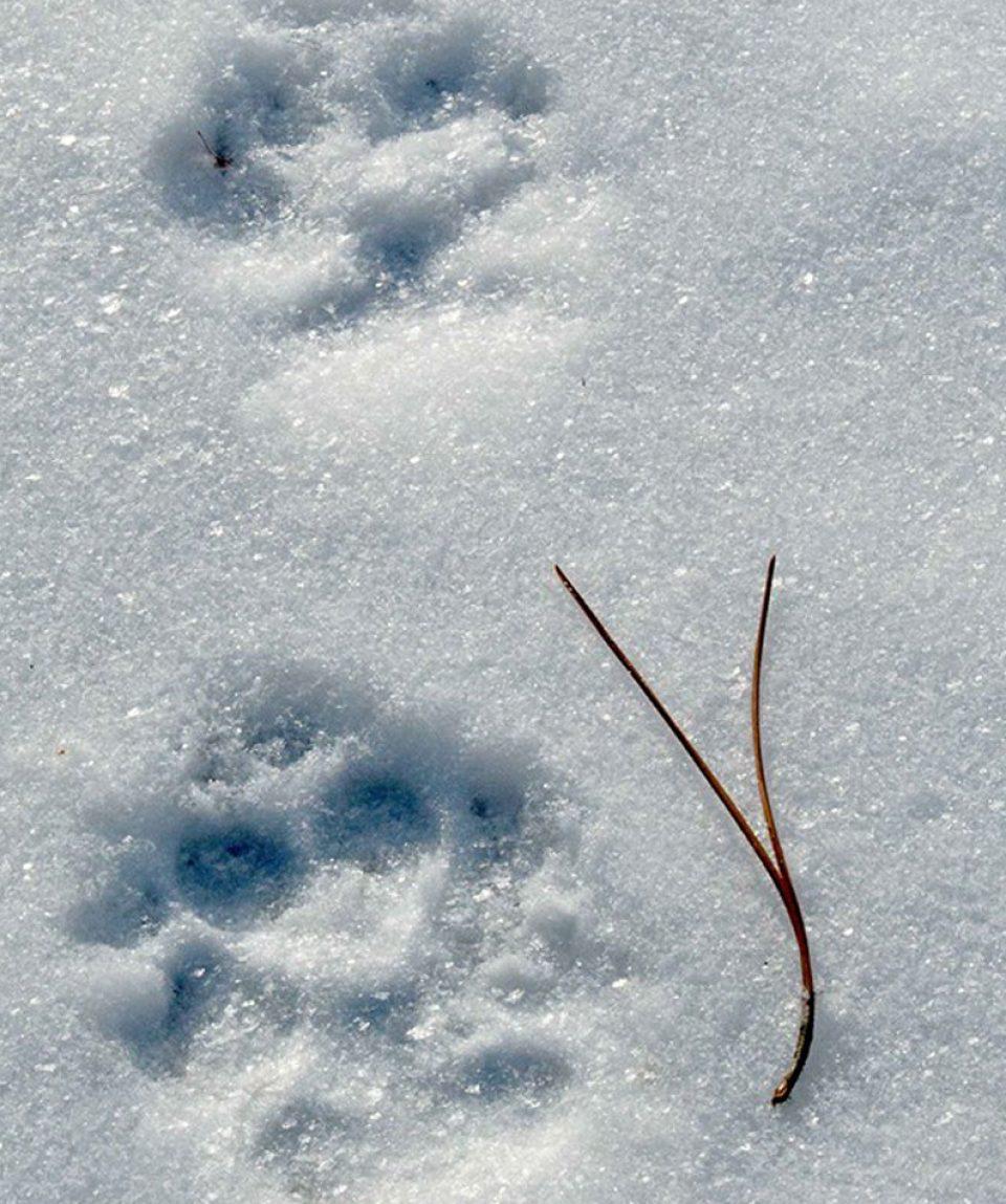 winter_ecology